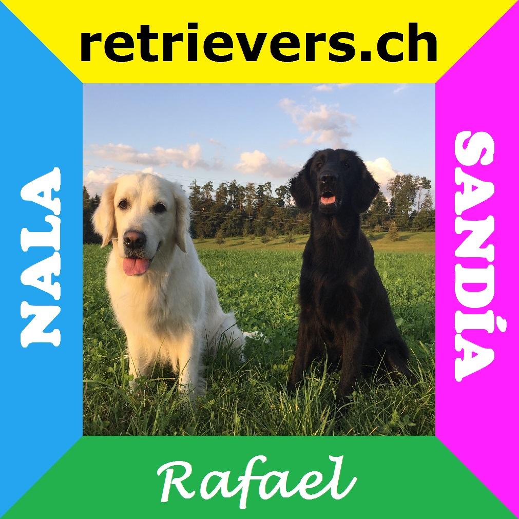 retrievers.ch